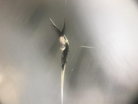 フォレスター フロントガラス 飛び石 修理 ウインドリペア
