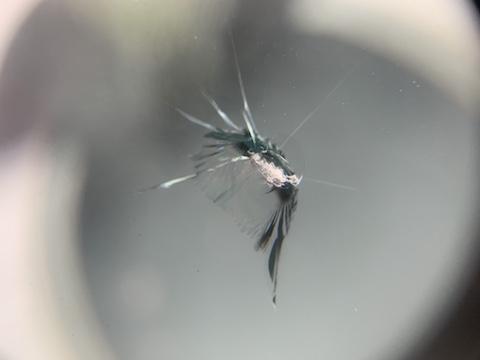 フロントガラスが割れても、ヒビが入っても修理が可能!専門店にお任せください!