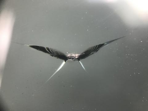 フロントガラスに複数傷があっても、ウインドリペアで修理が可能!