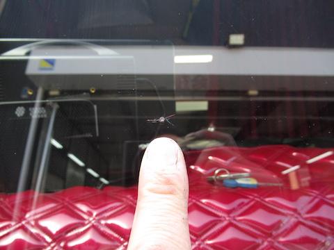 4トントラックでも、フロントガラスの飛び石によるヒビ割れ修理やります!